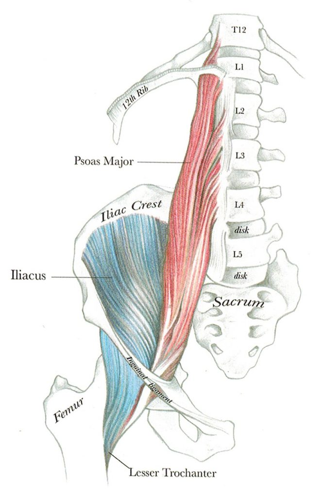 Psoas and Iliacus